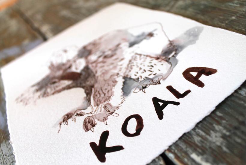 koala_landscape