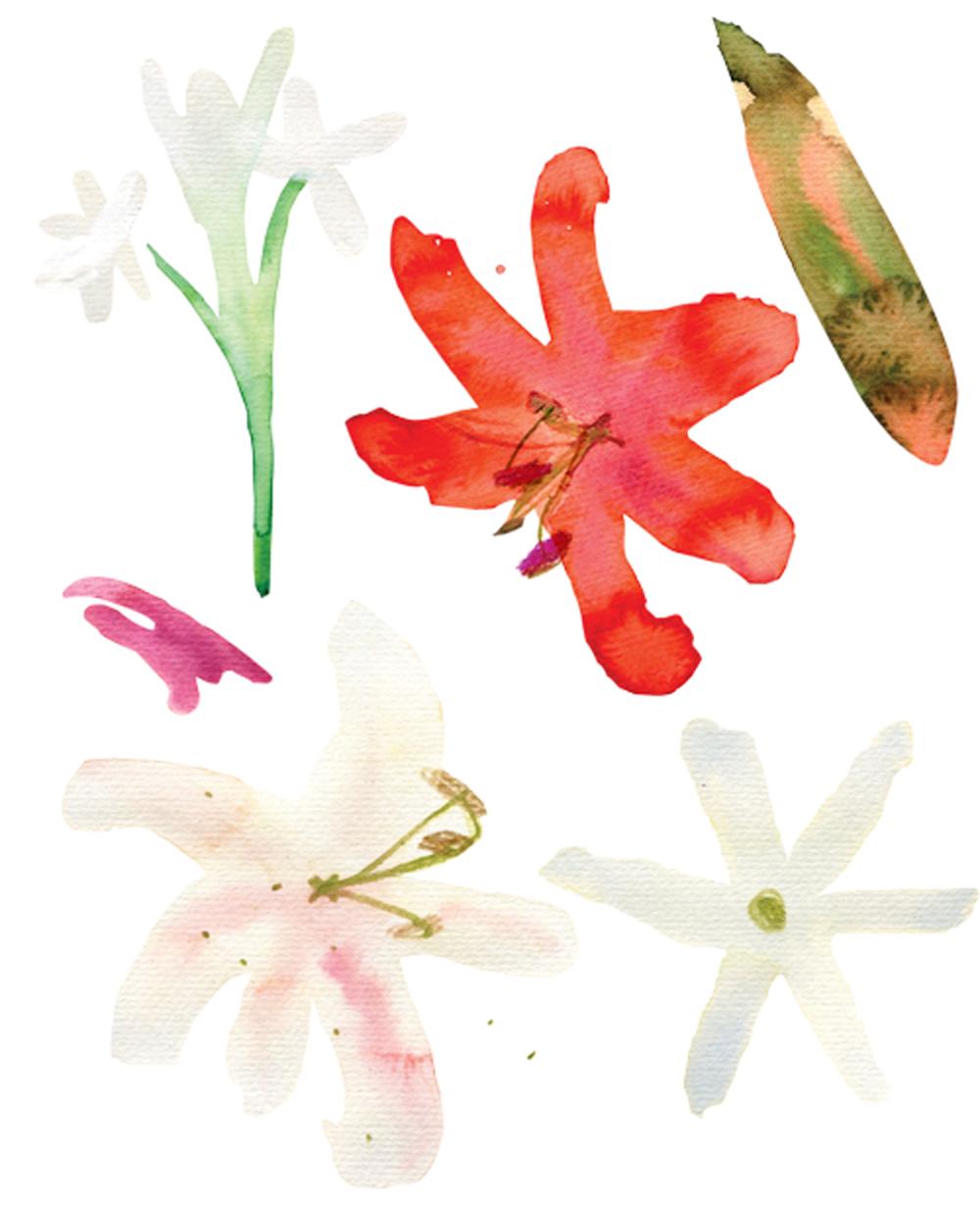watercolors6