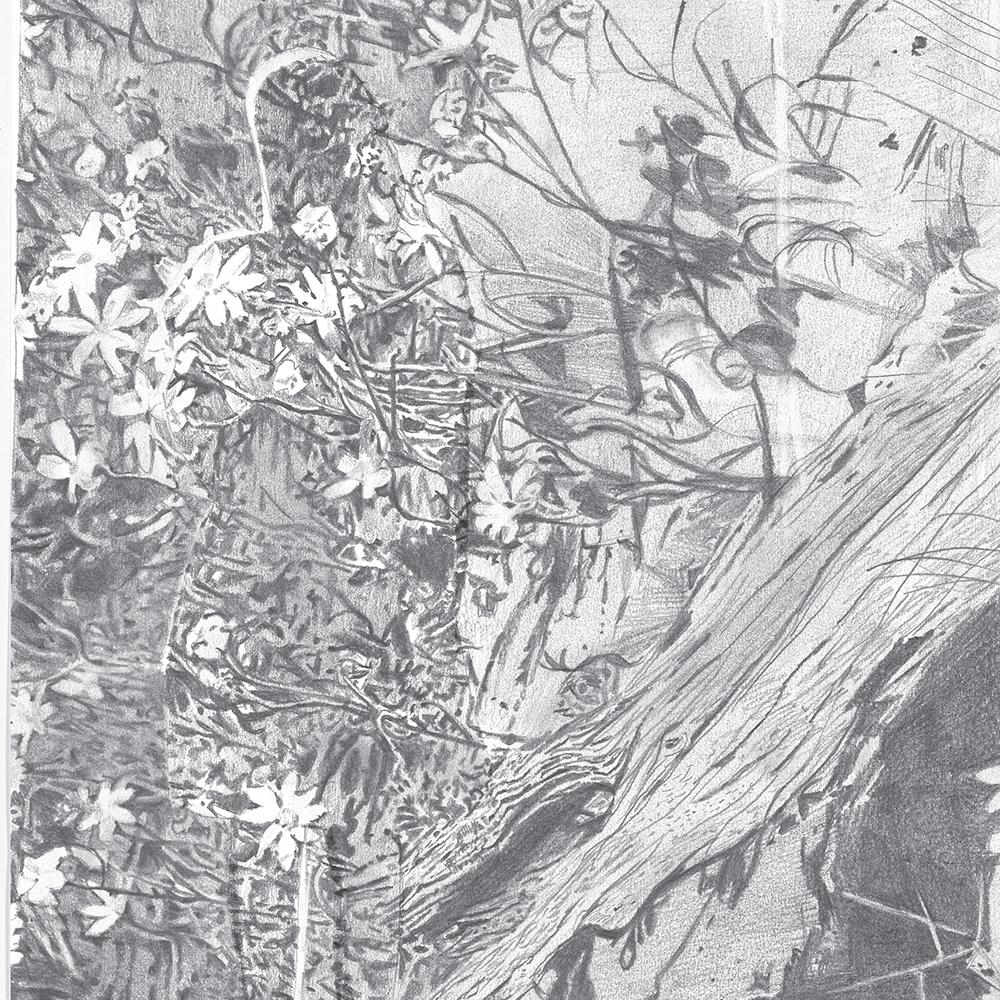 Pinotta-compositions